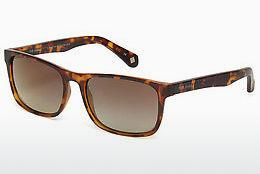 Ophthalmics Ted Baker 1493 173